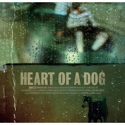 bo heart-of-a-dog