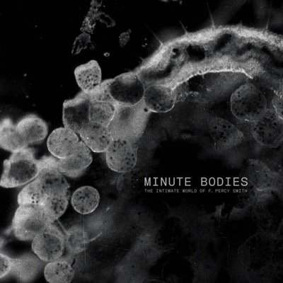 bo minute-bodies