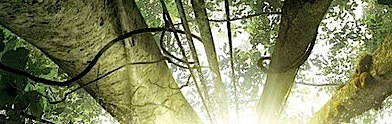 il-etait-foret,bride_frankenstein,strategie-ender,counselor,grimm,im-in-love-with-a-church-girl,malavita,last-passenger,fitzwilly,indic,carrie-2013,one-chance, - Nouveautés BO : notre sélection et annonce des labels au 22 octobre 2013