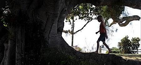 frankenstein_project,tree,hetzel,artemiev,soleil_trompeur2, - Cannes #11 - dernier jour avant clôture : Un arbre pour se protéger du soleil